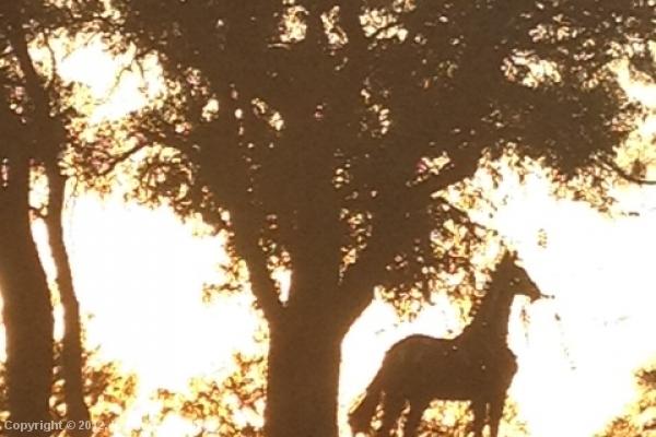 Drifter at sunset (10-26-2012)