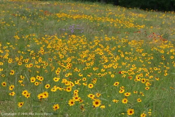 Ranch Page_11-wildflowers