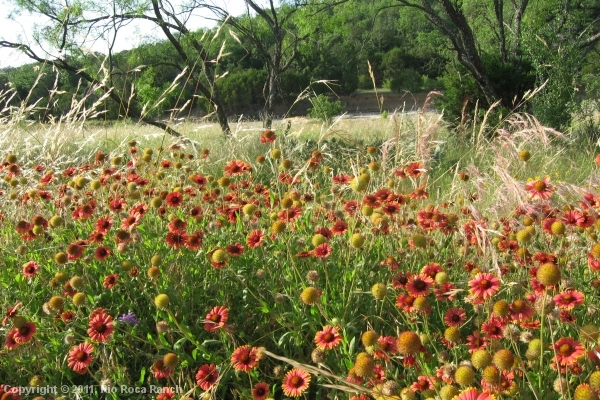 Ranch Page_13-wildflowers