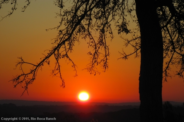 Ranch Page_6-sunset tree